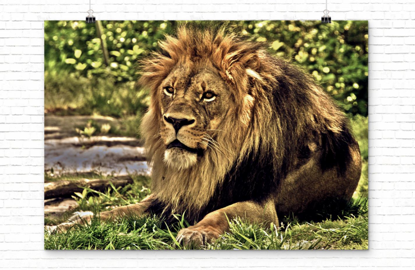 oliver-rios-lion-slider-banner-1
